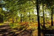 Efterårsbillede