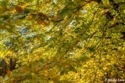 Efterårsbillede af træ med gule blade